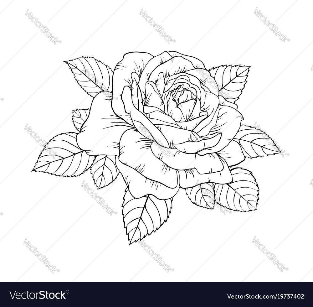 Beautiful black and white rose and leaves floral