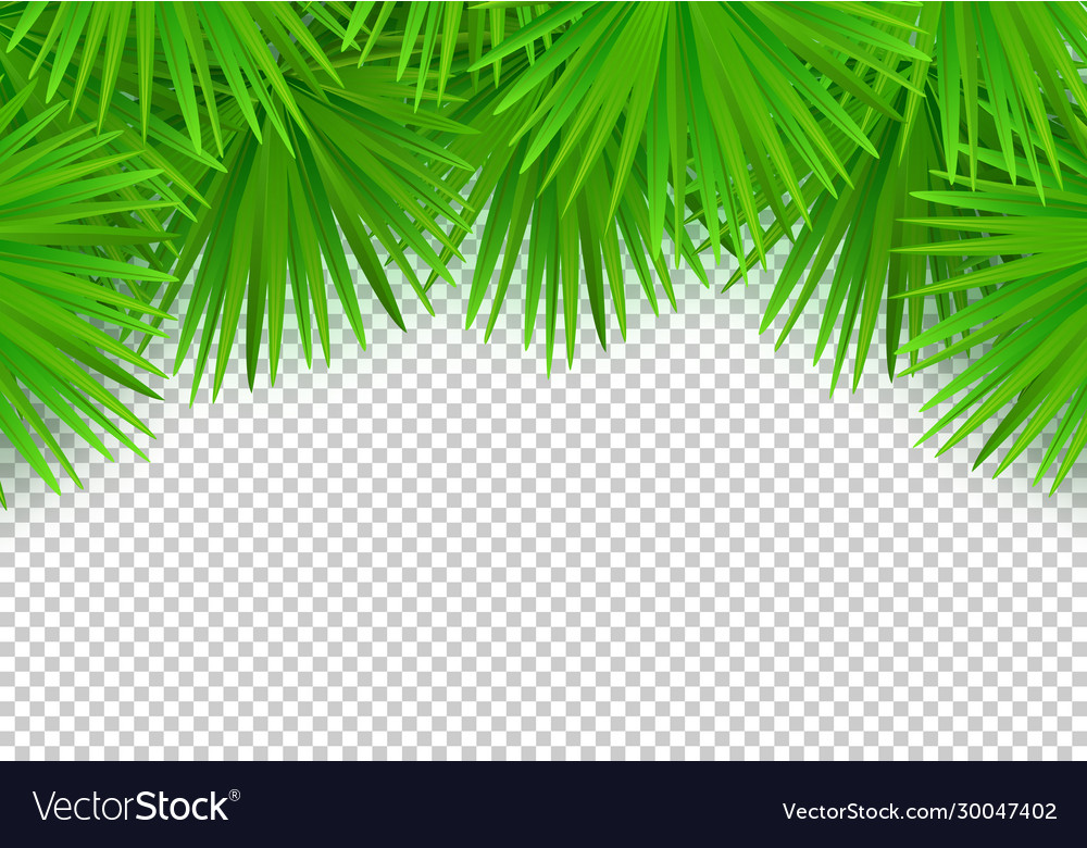 Summer palm leaves on transparent background