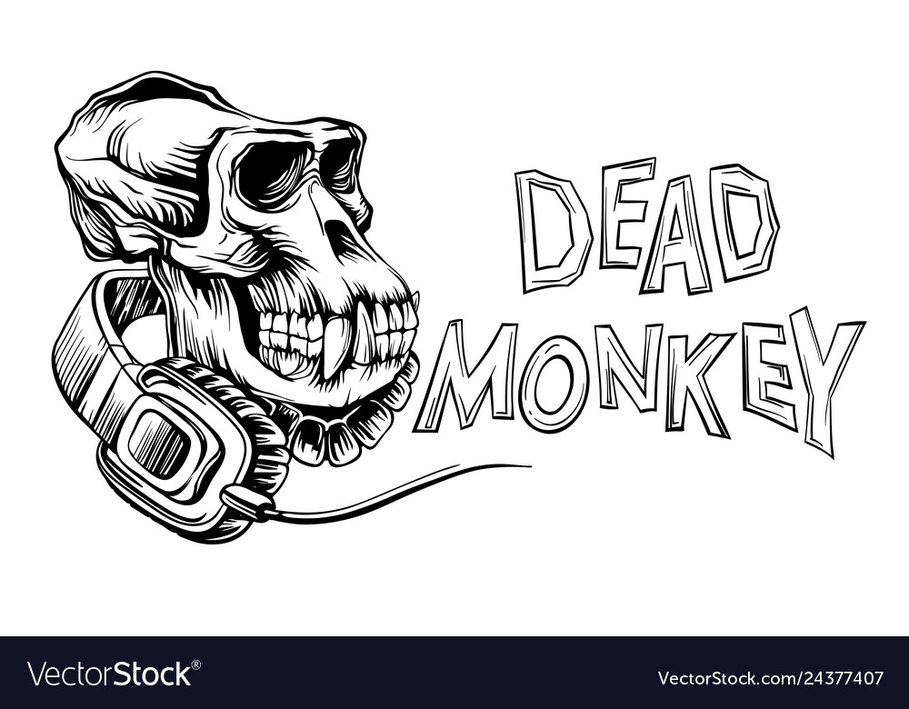 Dead monkey skull