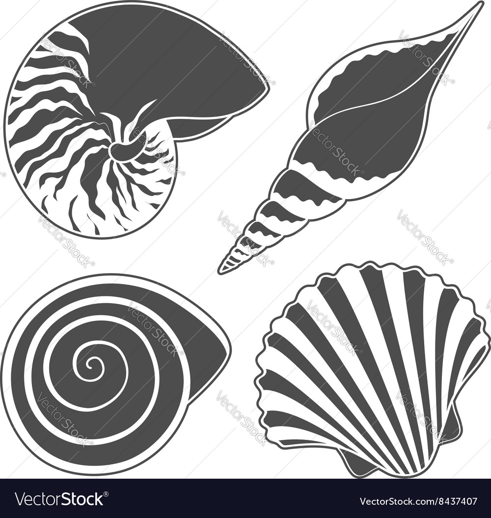 Set of graphic sea shells isolated objects