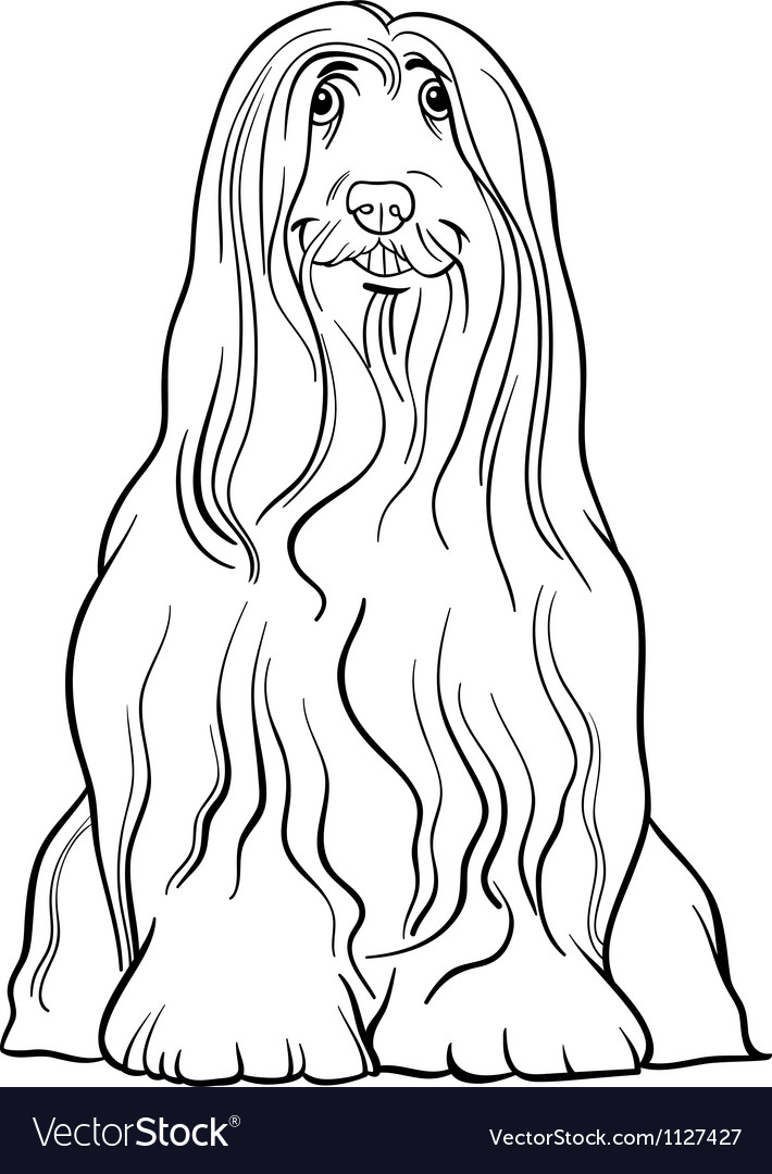 Bearded Collie Dog Cartoon For Coloring Royalty Free Vector