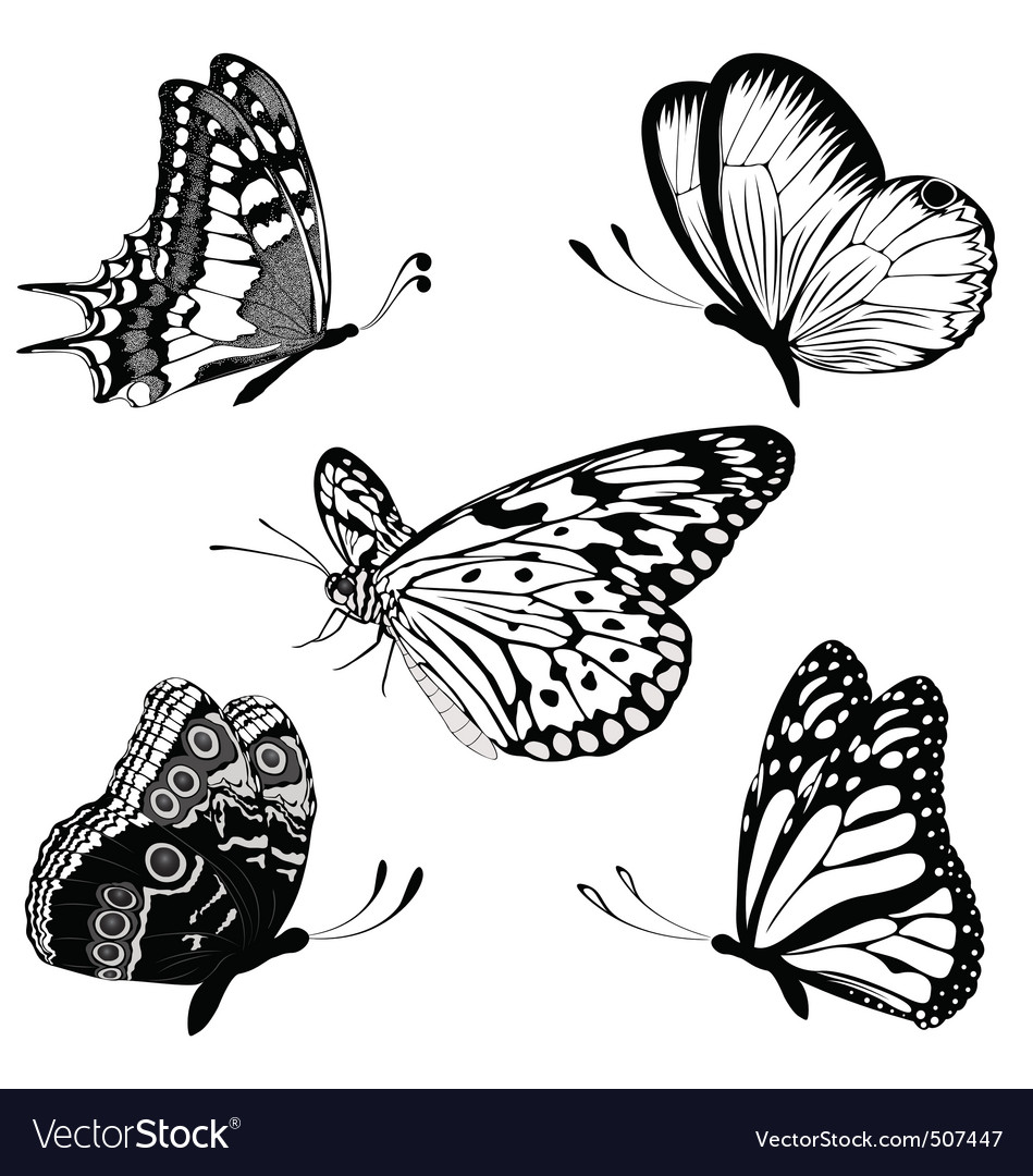 170fd9ea6a5a2 Set black white butterflies of a tattoo Royalty Free Vector