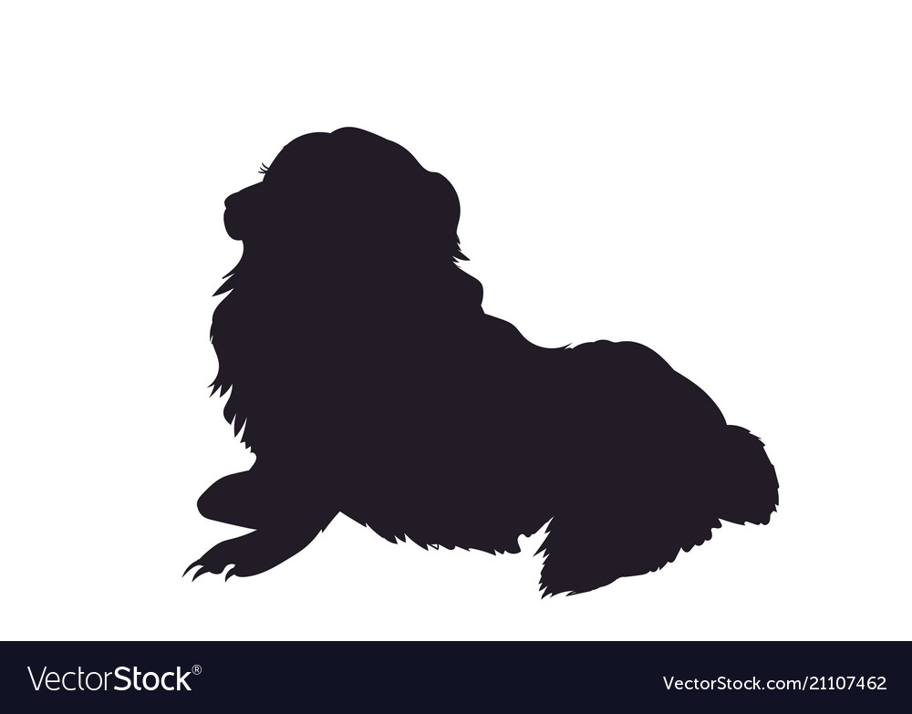 Dog lies silhouette