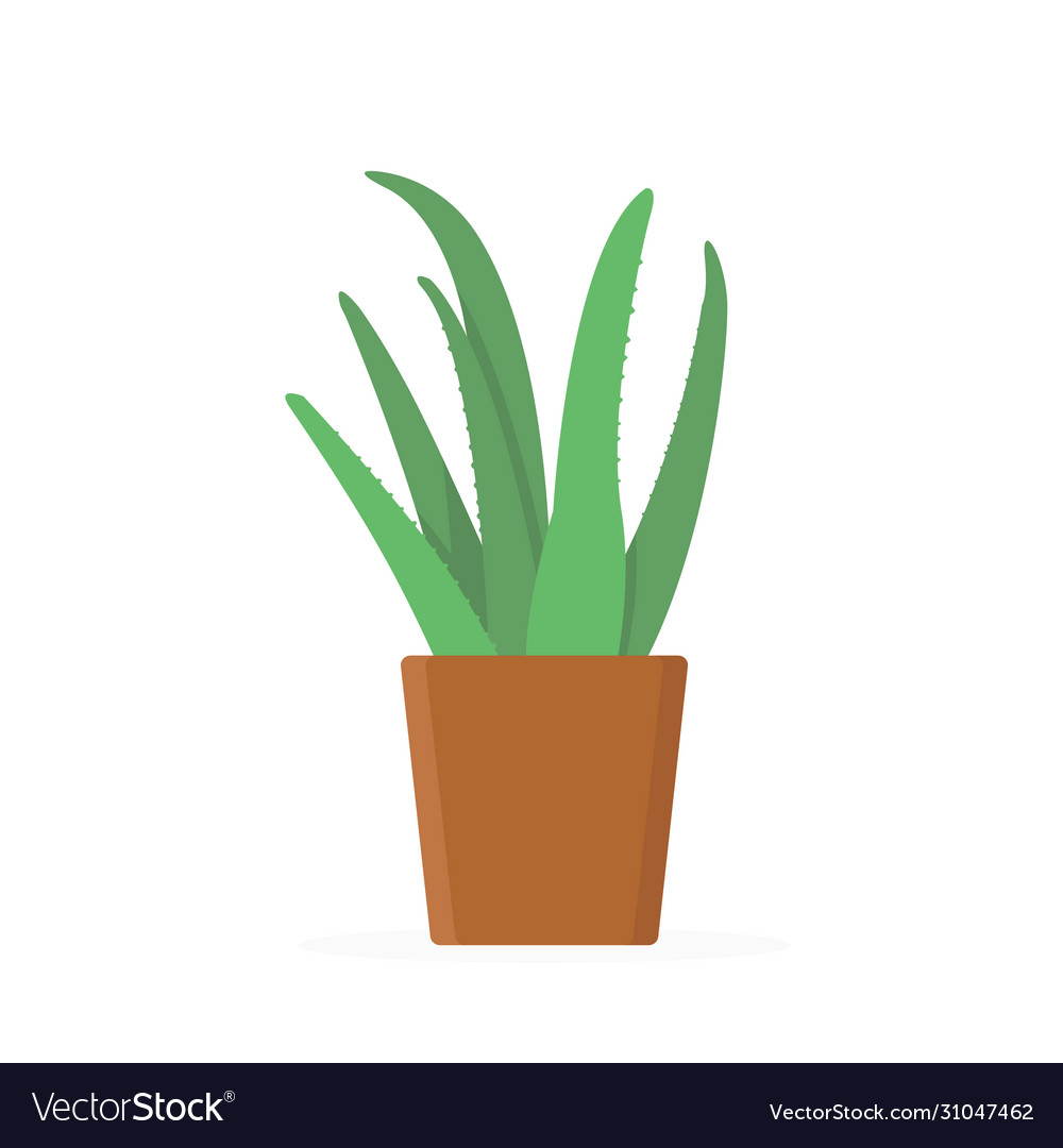 Green Aloe Vera Plant With Leaves In Brown Pot Vector Image