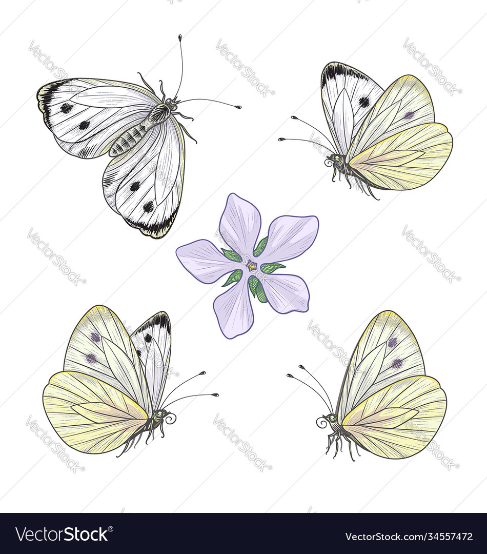 Hand drawn flying and sitting cabbage butterflies