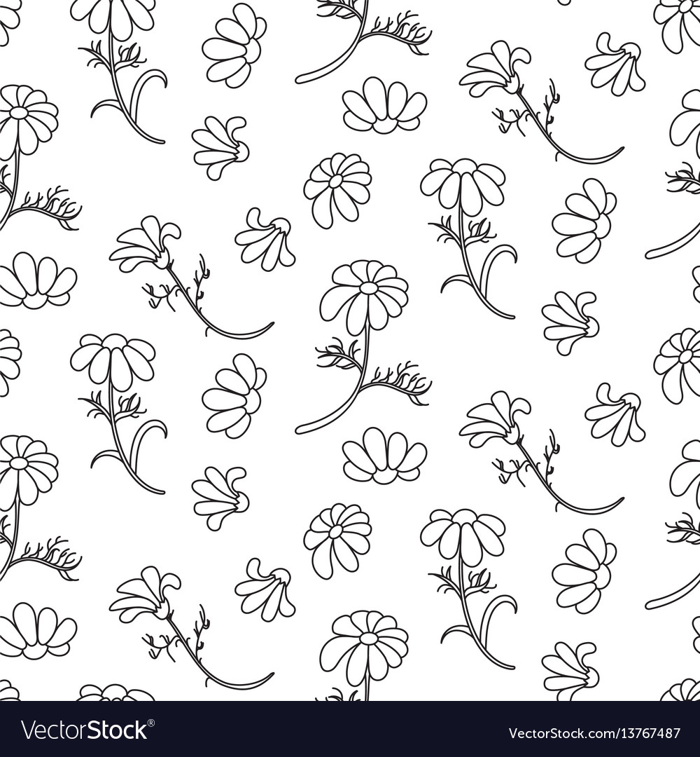 Chamomile outline seamless floral pattern vector image