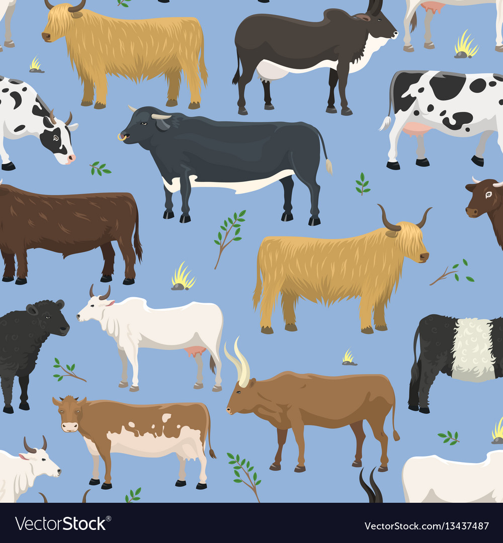Set of bulls and cows farm animal cattle mammal