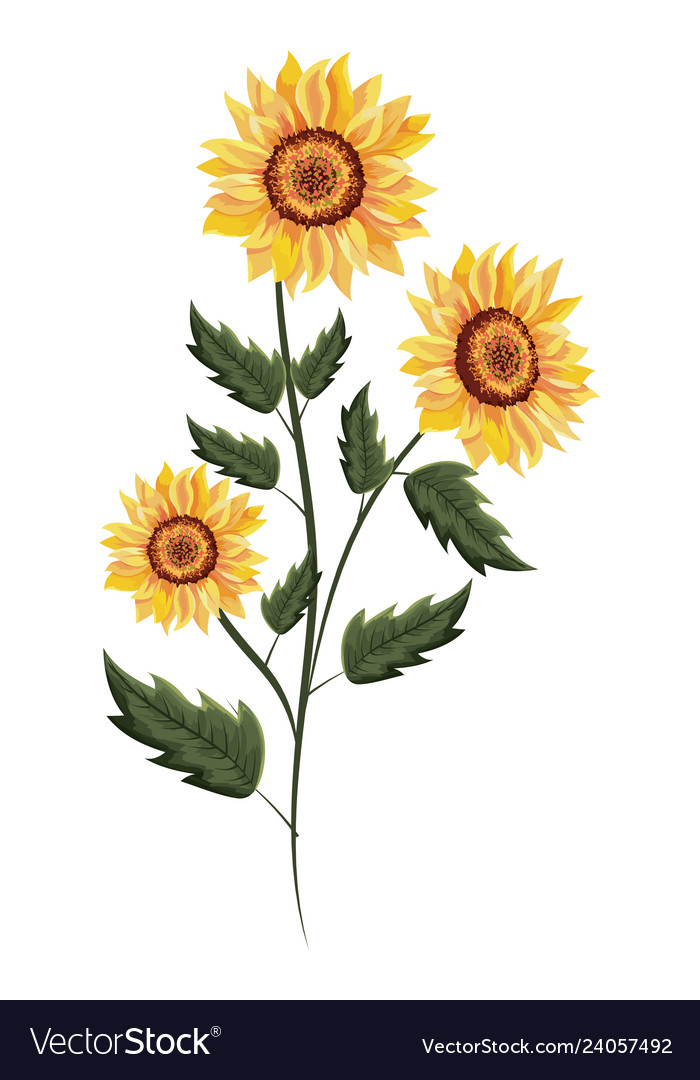 Spring sunflower drawing with leaves