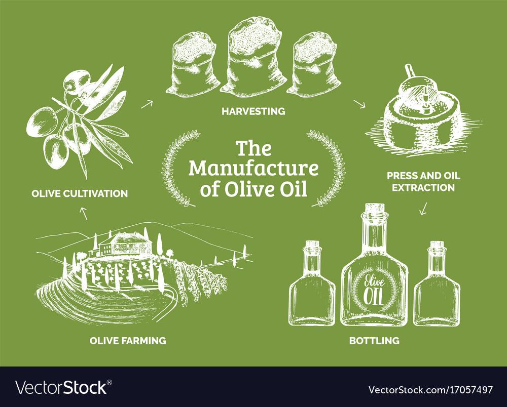 Vintage olive oil bottle hand