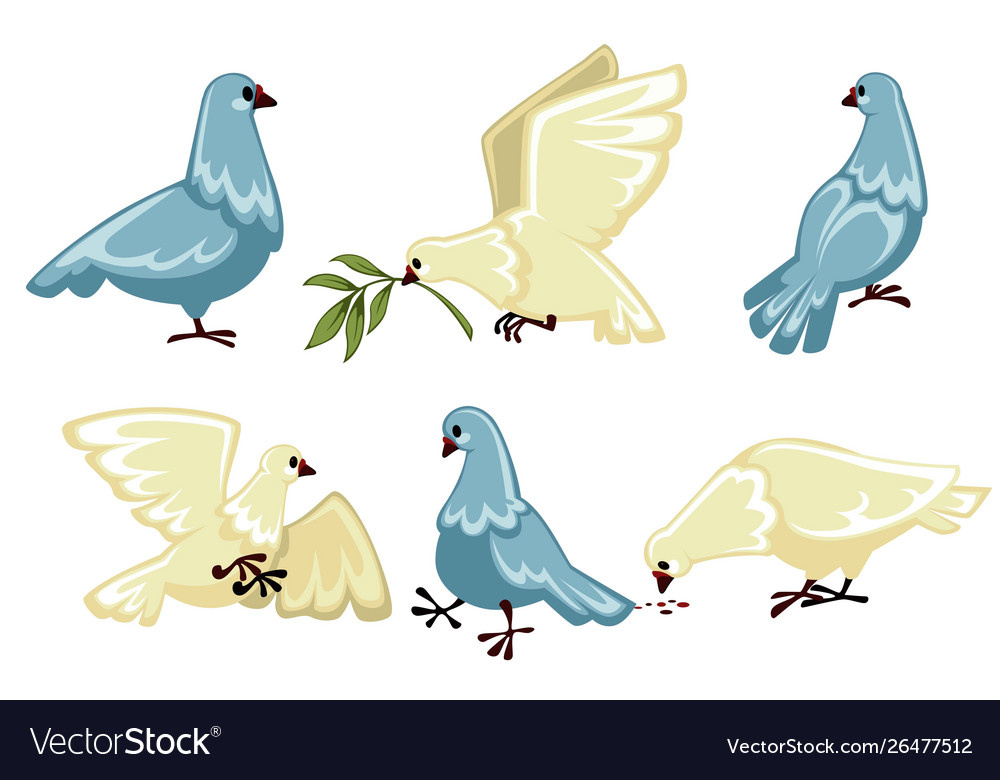 Pigeons or doves isolated wild birds flying and