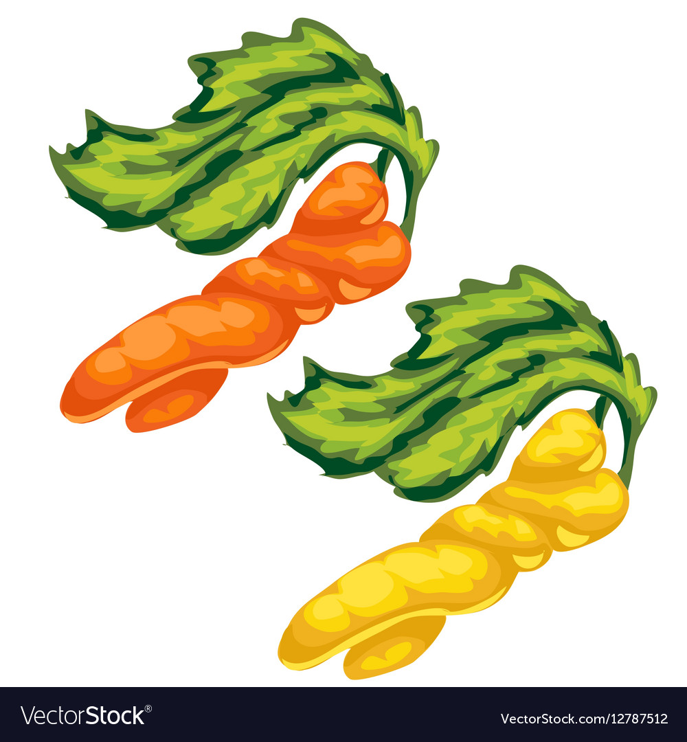 Yellow and orange swirled carrot vegetable