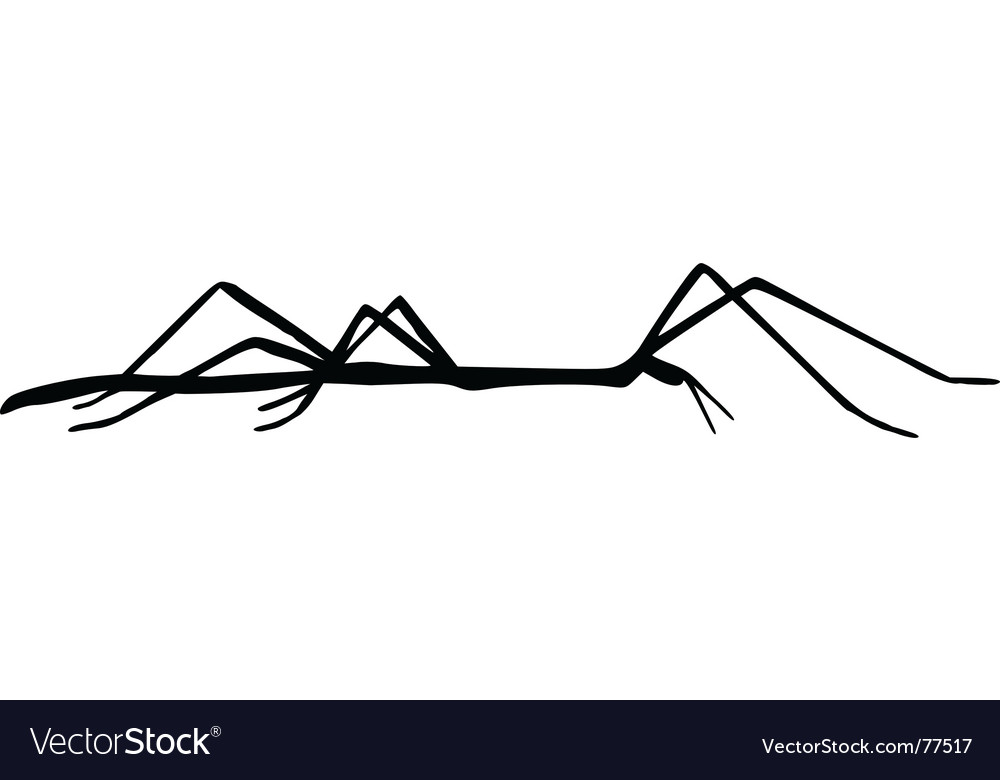 Stick insect vector image