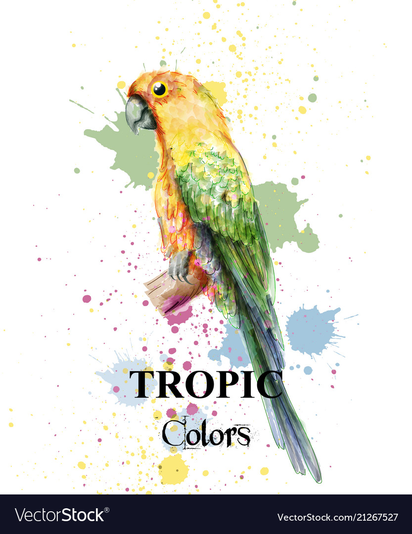 Tropical paradise parrot bird watercolor