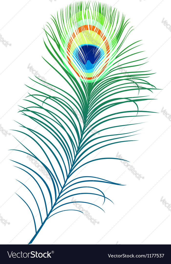 Feather Of Peacock Vector Image