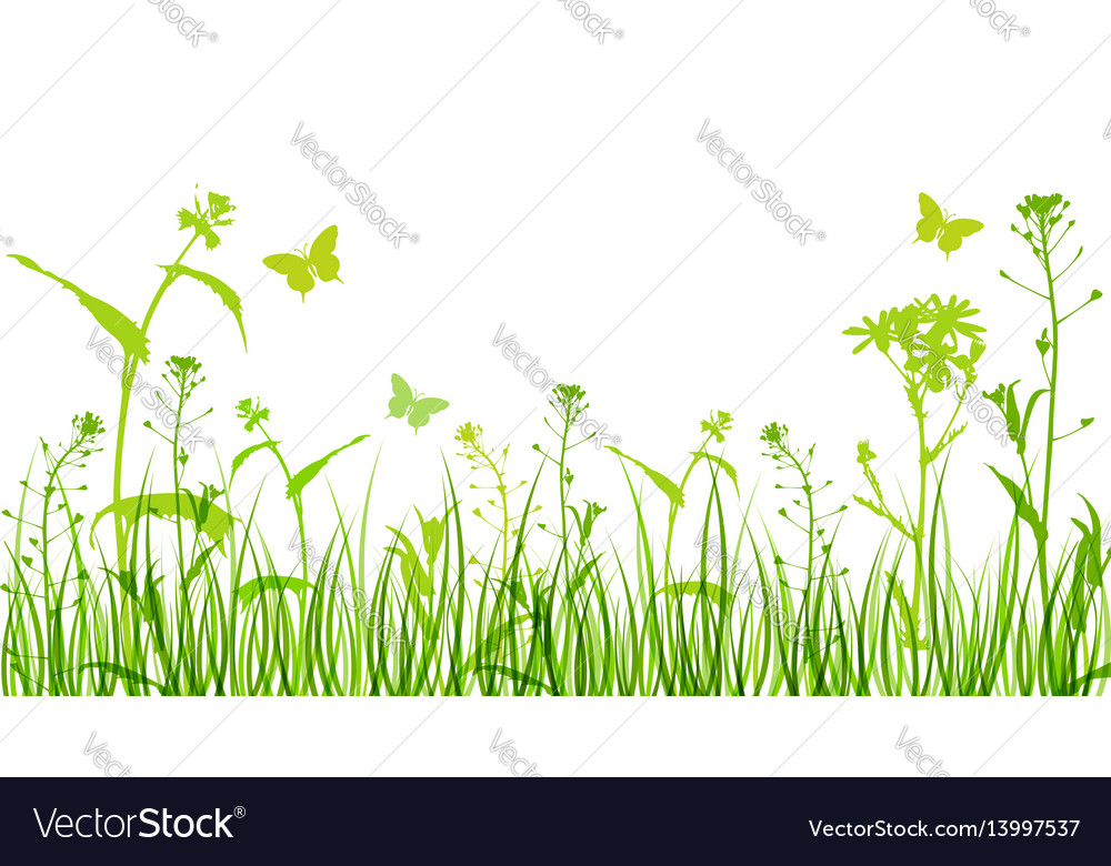 Flowers and green grass