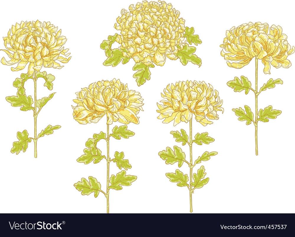 Set of 5 chrysanthemum flower