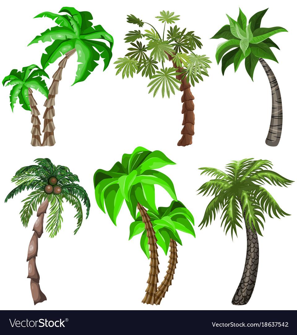 Set of tropical plants