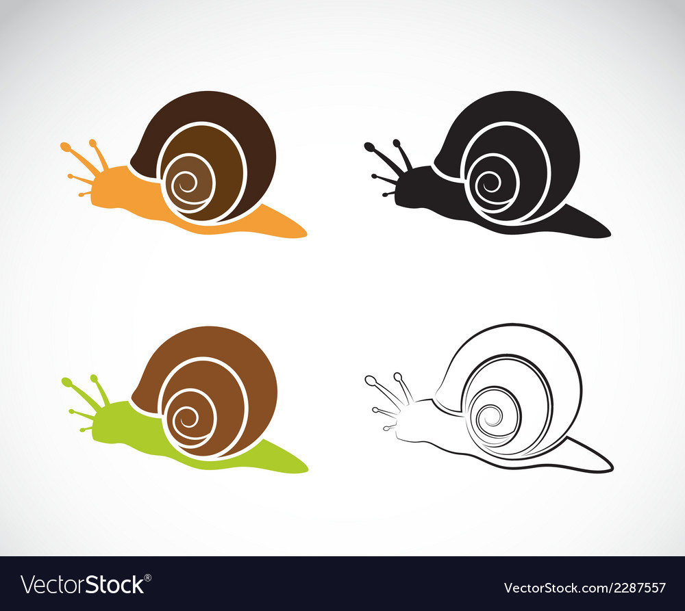 Image of an snail