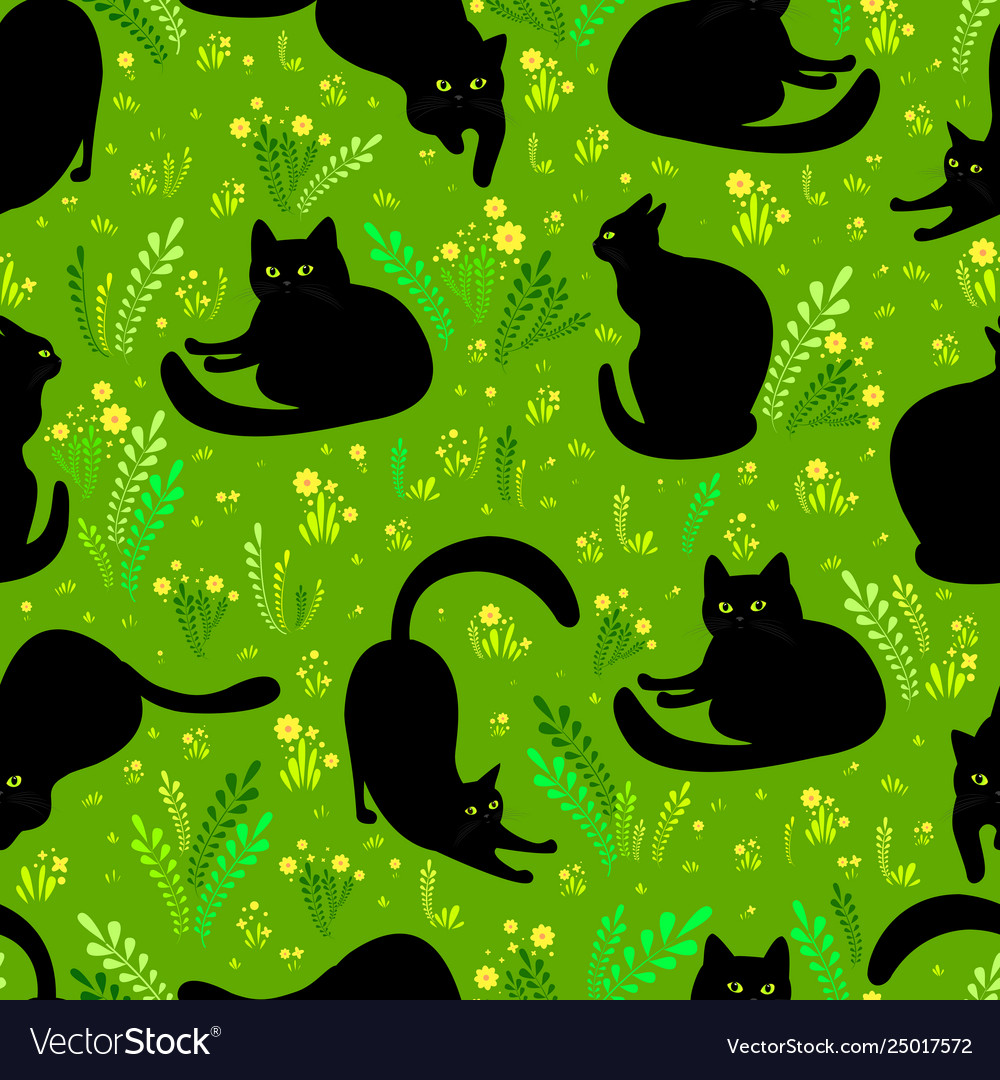 Black cat in different poses on a background of