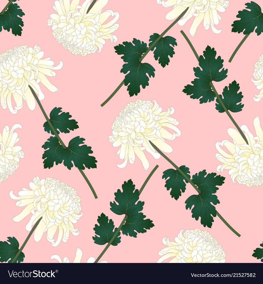 White chrysanthemum flower on pink background vector image mightylinksfo
