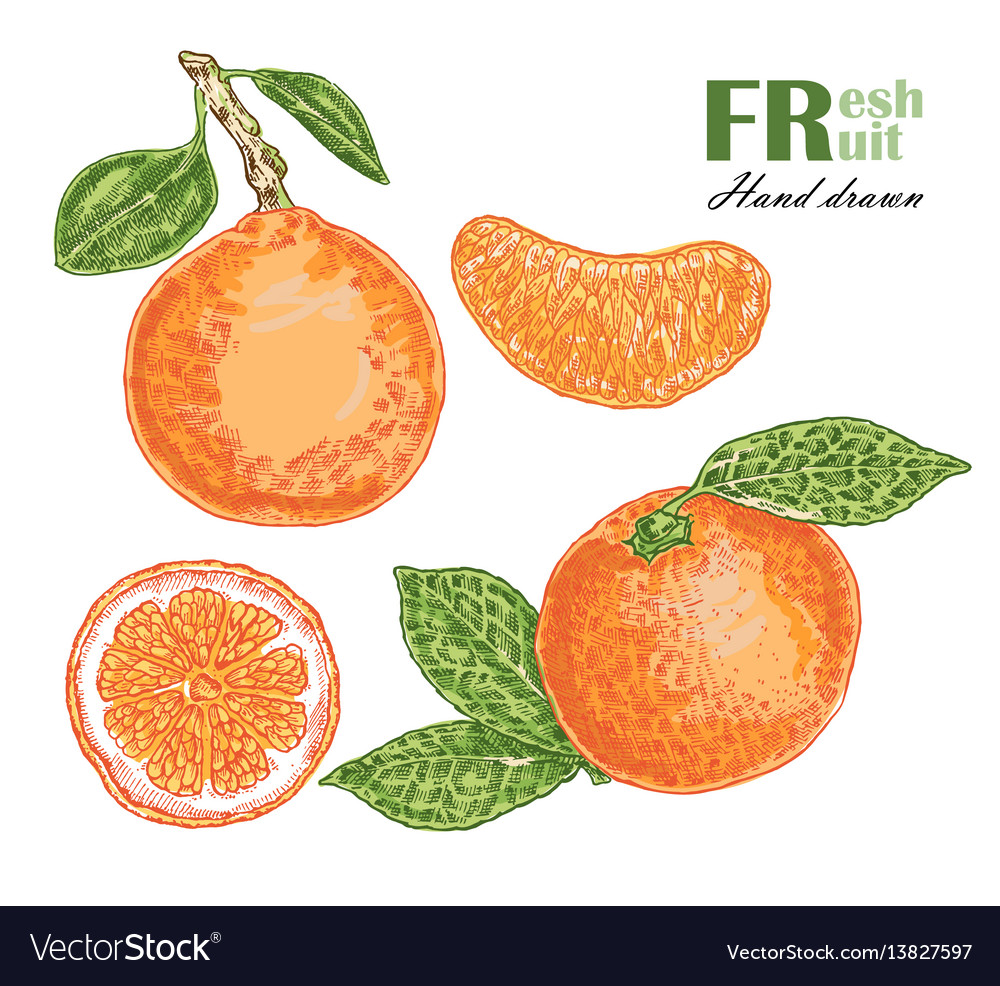 Orange isolated on white background fruit