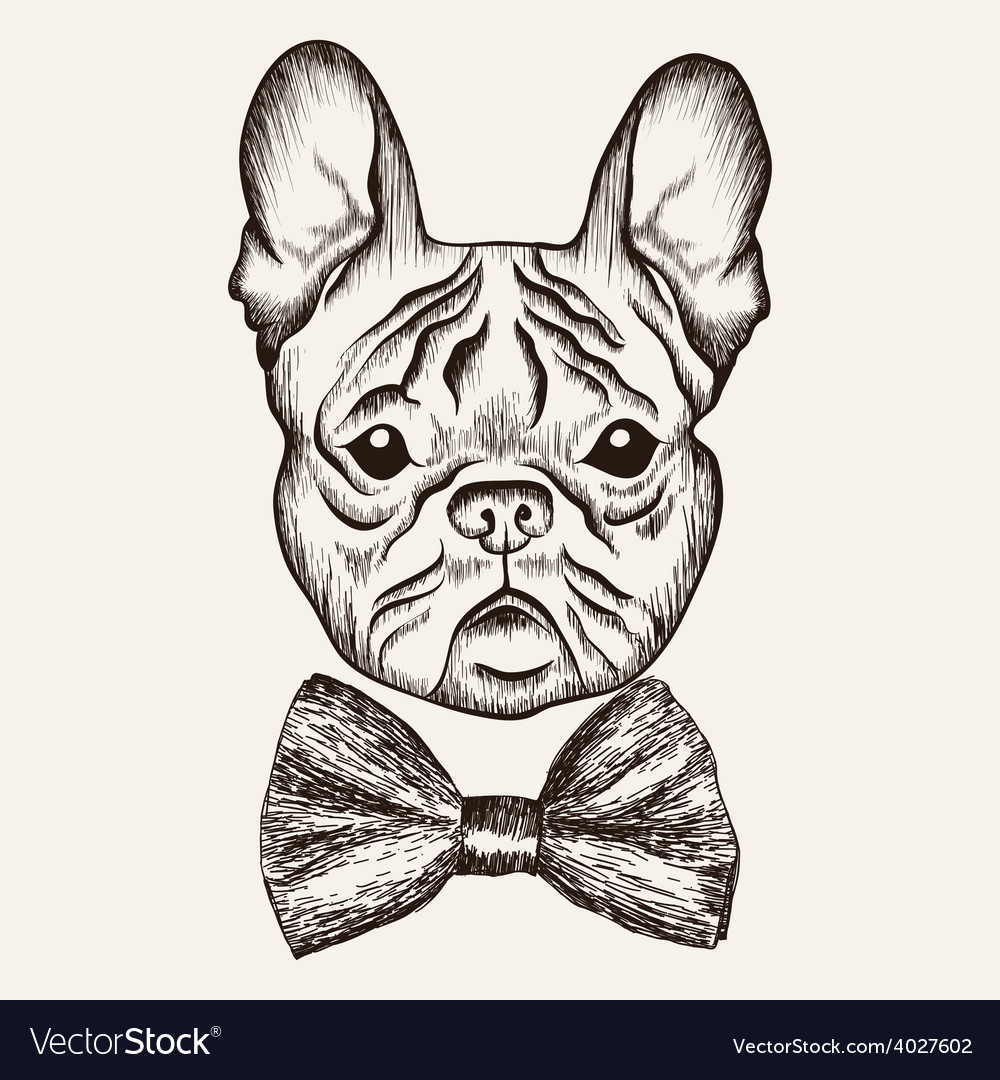 Sketch French Bulldog With Bow Tie Hand Drawn Dog