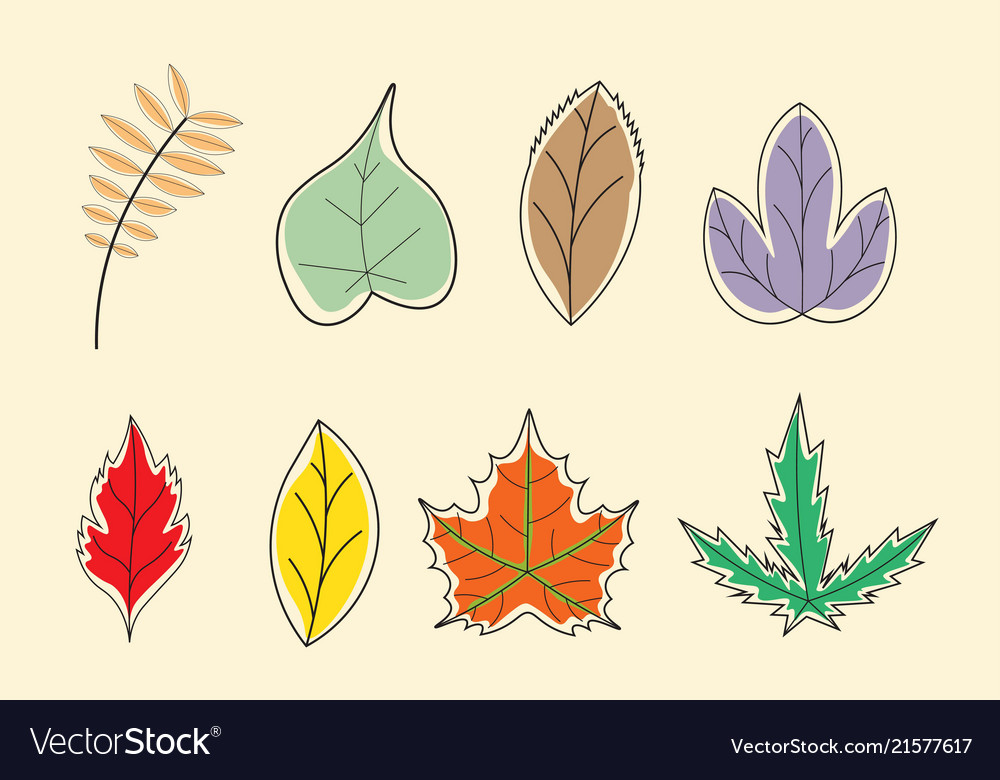 Leaves colorful with hand drawn collection style