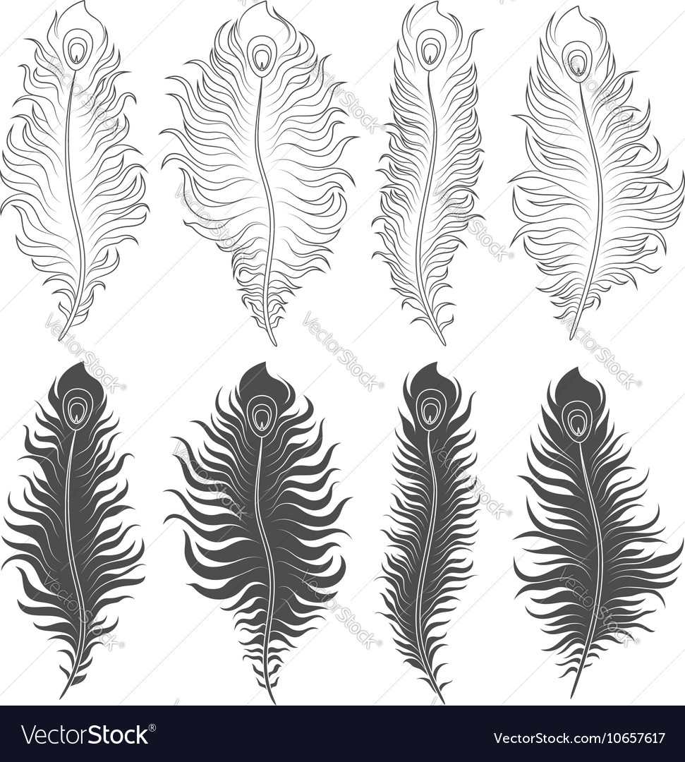 Set of with peacock feathers