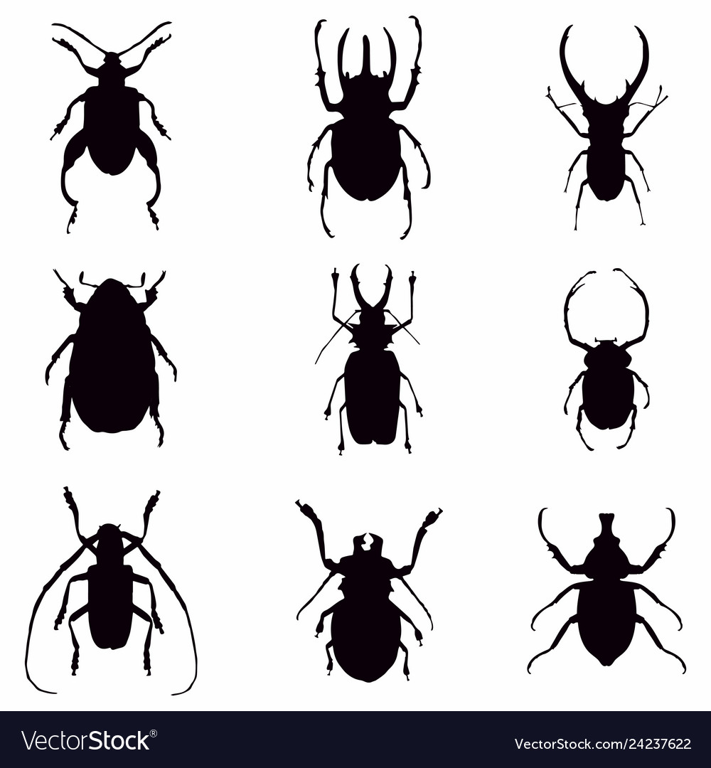 Beetle bugs silhouette