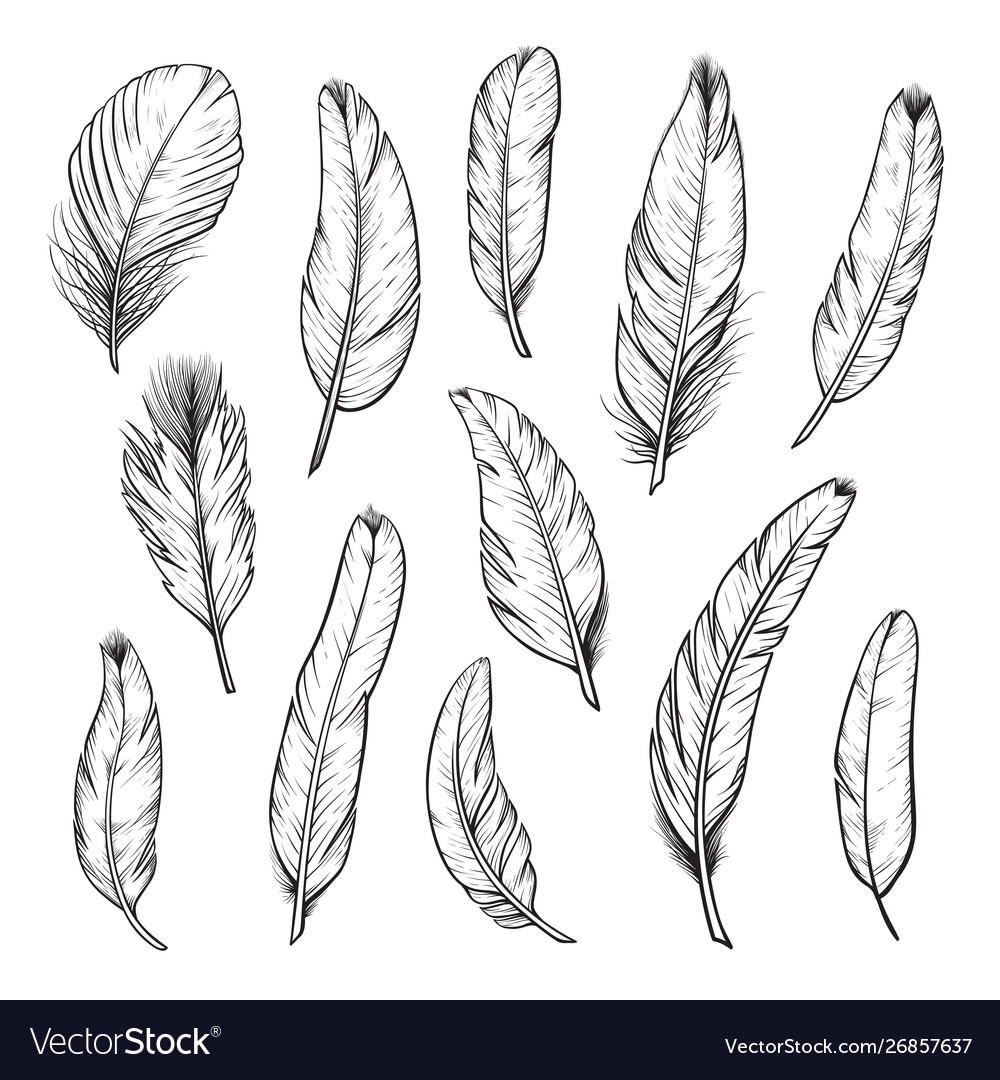 Birds feathers hand drawn isolated