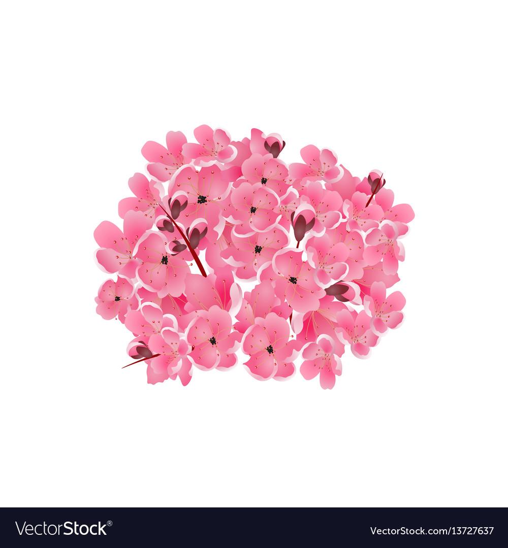 Sakura bouquet of pink cherry flowers isolated