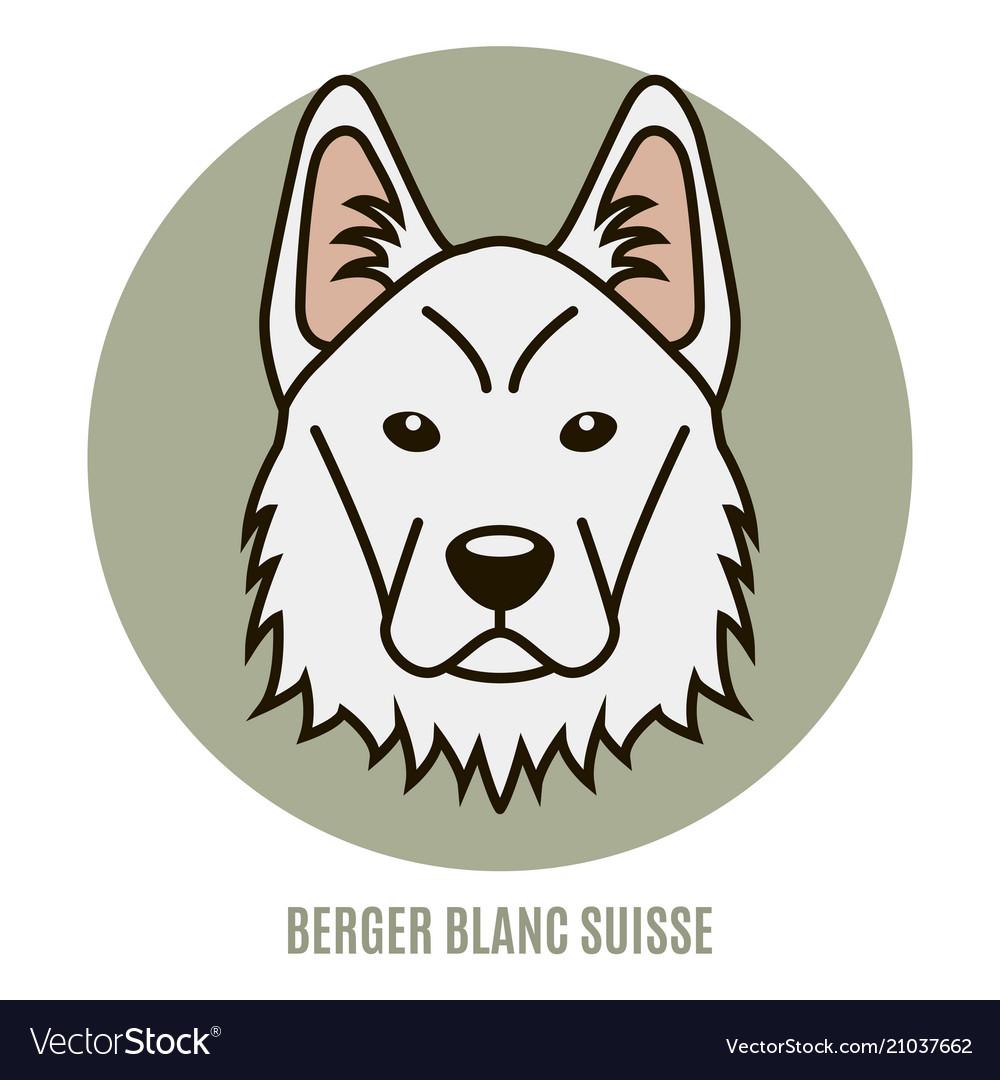 Portrait berger blanc suisse