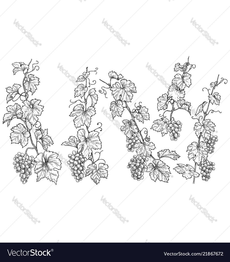 Hand drawn monochrome grape branches