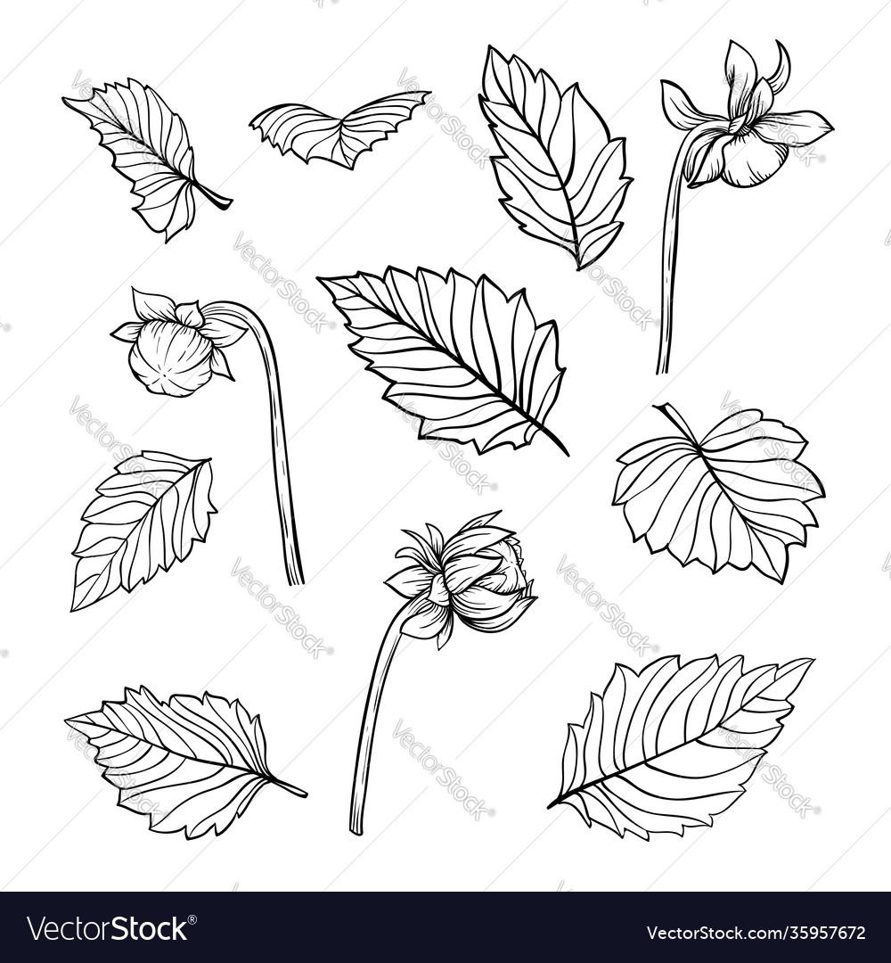 Set beautiful black and white dahlia leaves