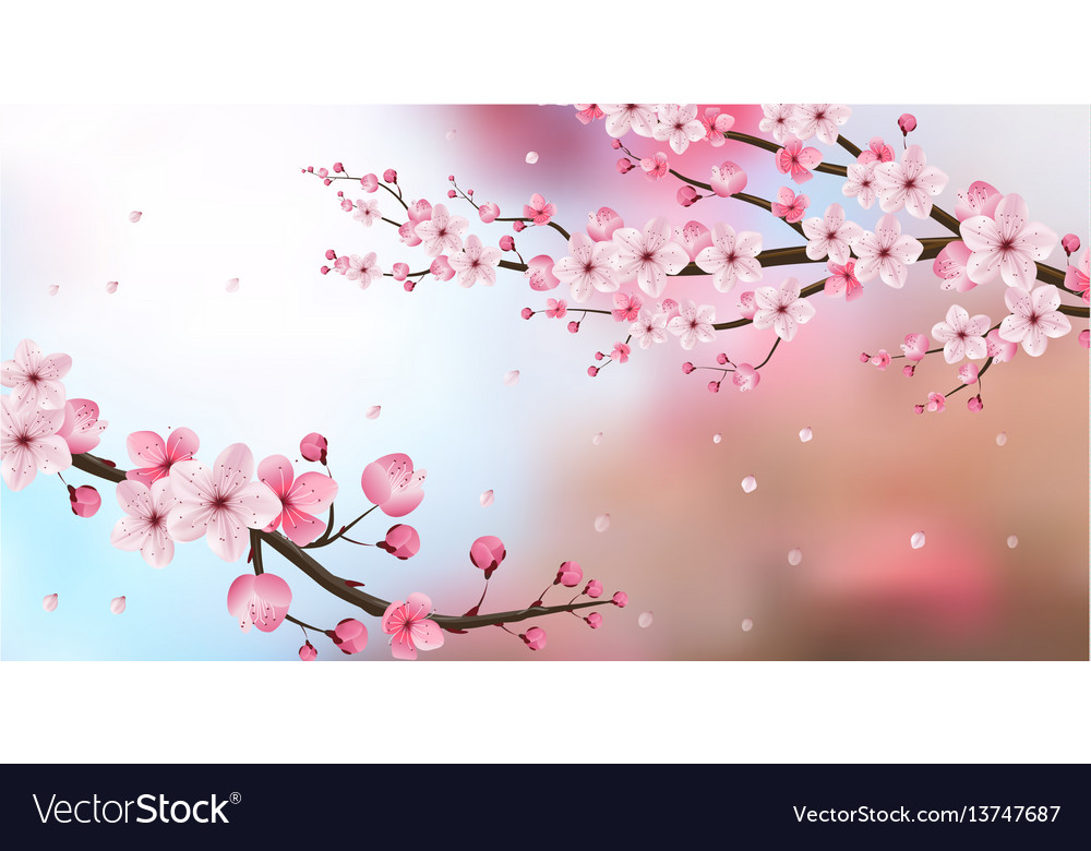 Cherry blossom realistic blur background vector image