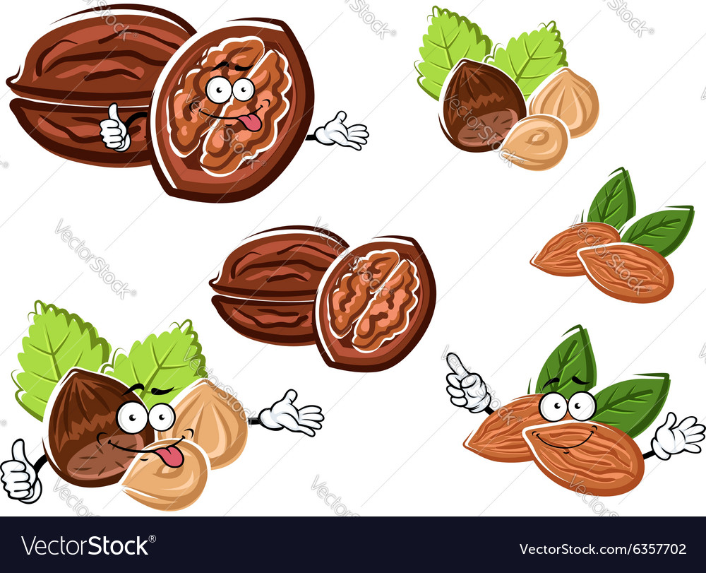 Almond walnut and hazelnut with kernels vector image