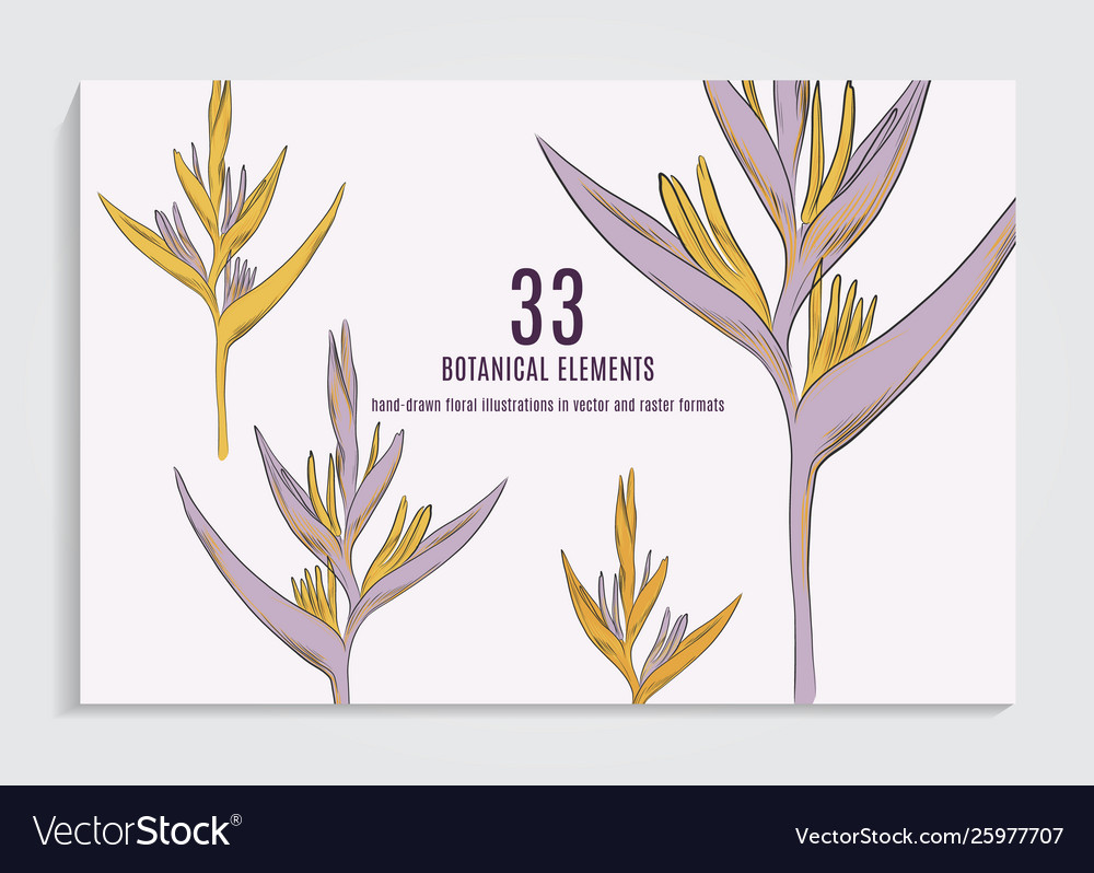Exotic flower in yellow violet colors greeting
