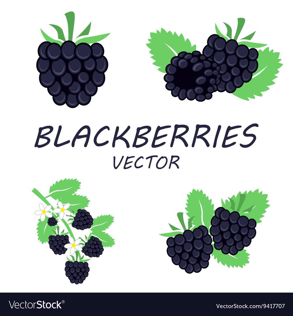 Flat blackberries icons set