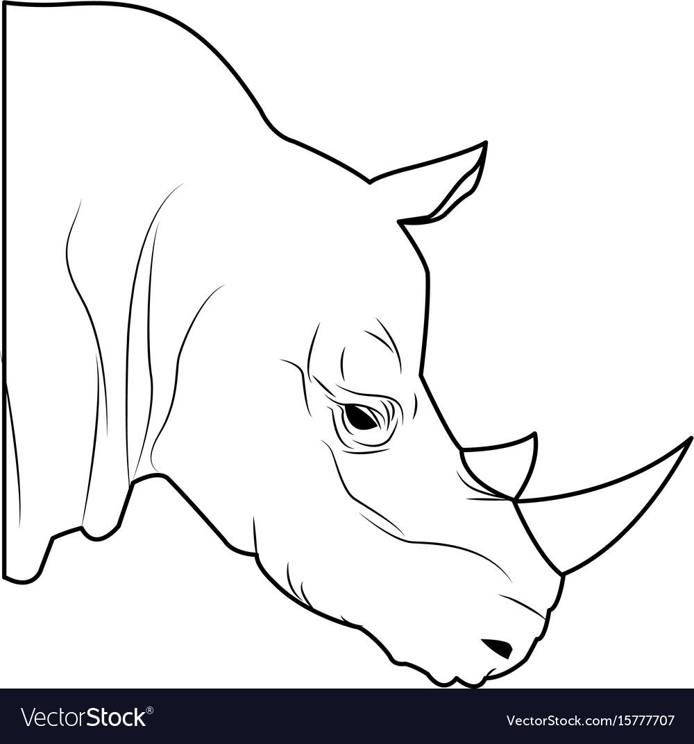 Rhino head wild animal africa exotic vector image