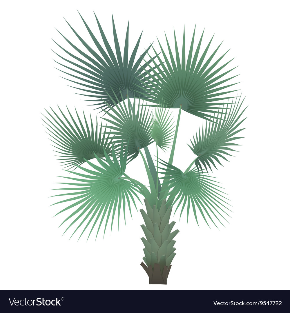 Tropical exotic palm tree isolated