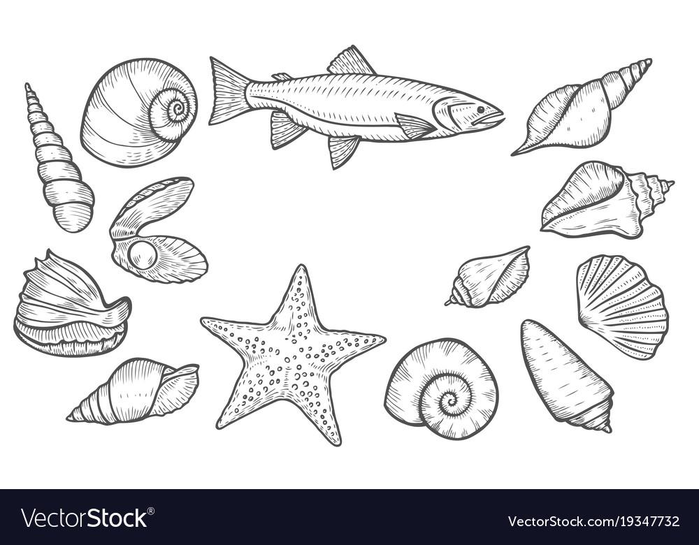 Hand drawn seashell