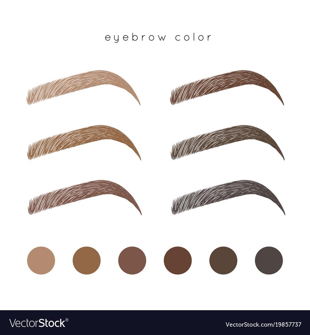 Eyebrow color vector image