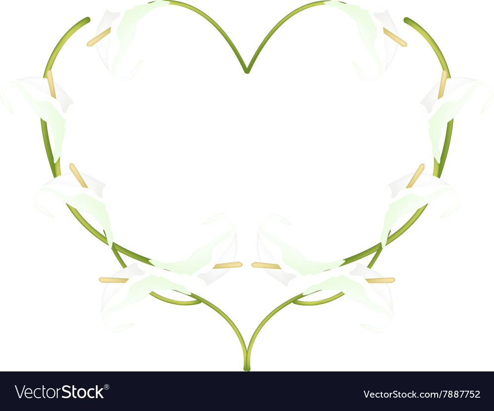Beautiful White Anthurium Flowers In Heart Shape Vector Image