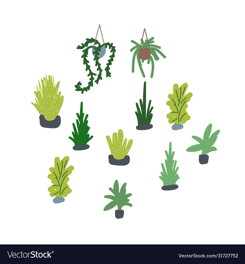 Houseplants set succulents vector