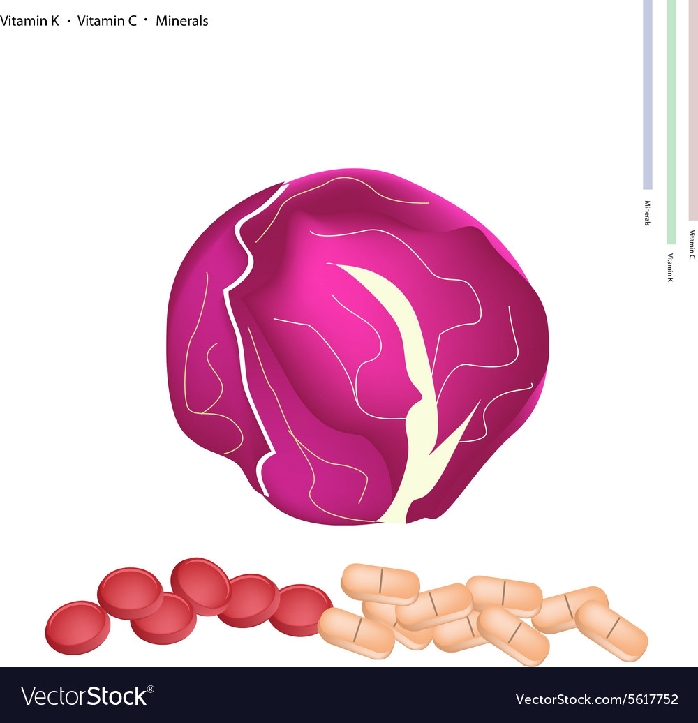 Red Cabbage with Vitamin K and Vitamin C vector image