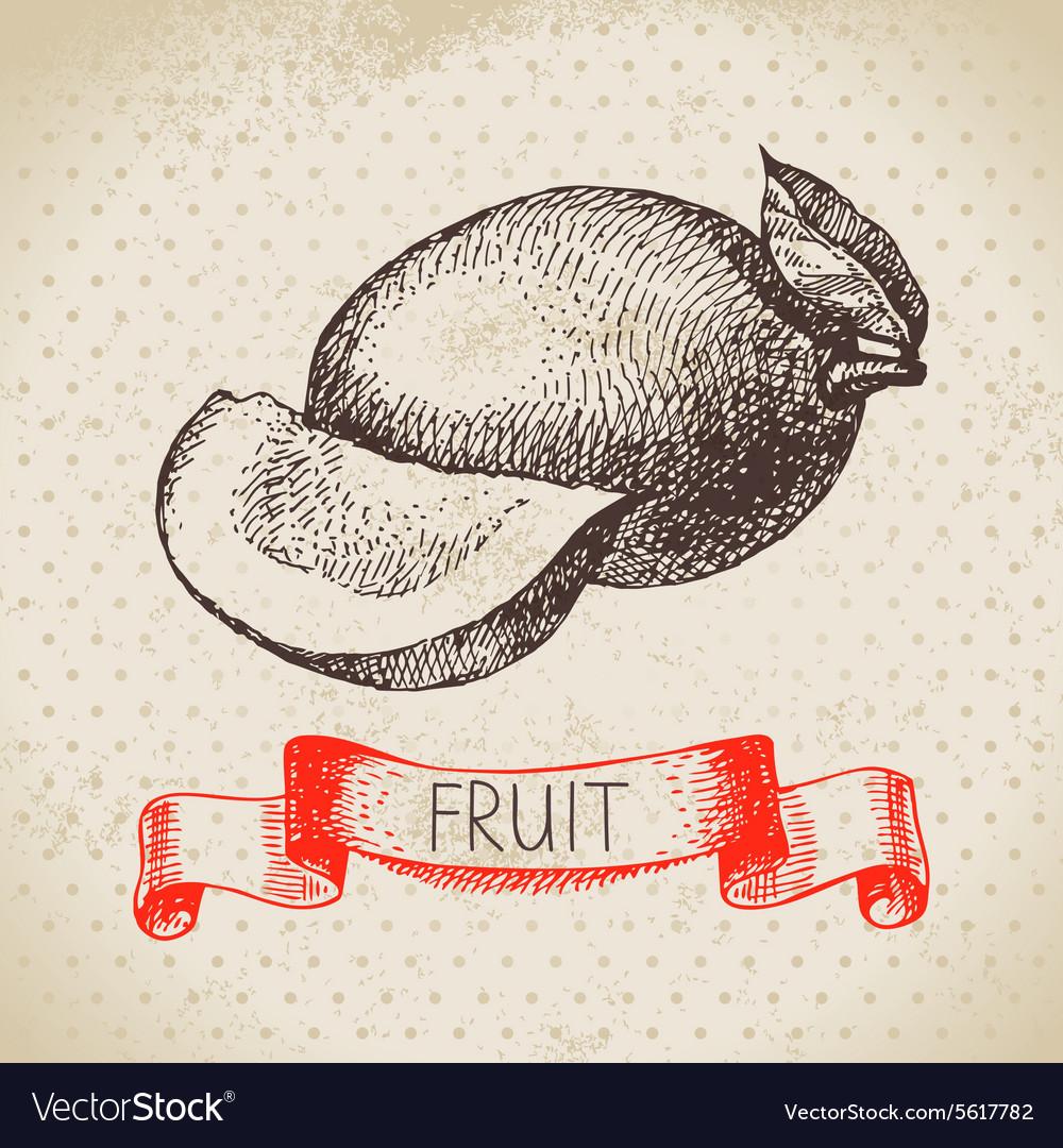 Hand drawn sketch fruit mango Eco food background vector image