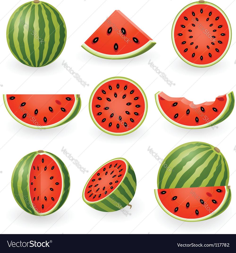 watermelon royalty free vector image vectorstock rh vectorstock com watermelon vector cute watermelon vector cute