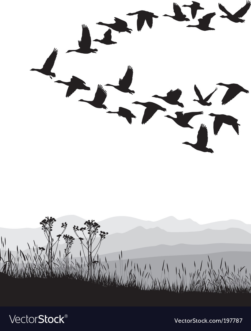 Migrating geese vector image