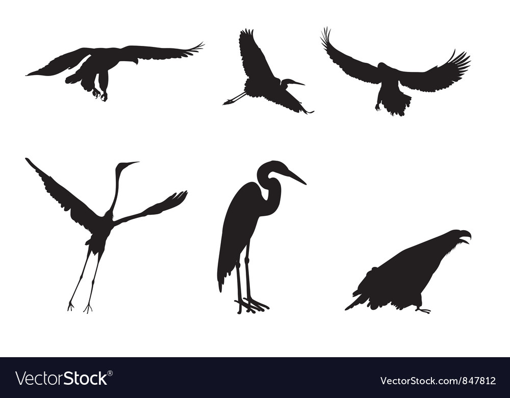 eagle and the stork royalty free vector image vectorstock rh vectorstock com stork victoria sandwich stork victoria sandwich