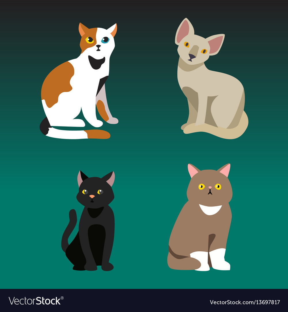 Cat breed cute pet portrait fluffy young adorable